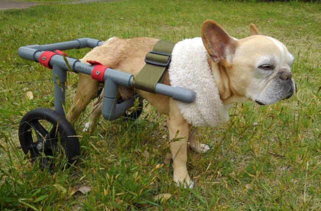 犬用車椅子 手作りのイメージ